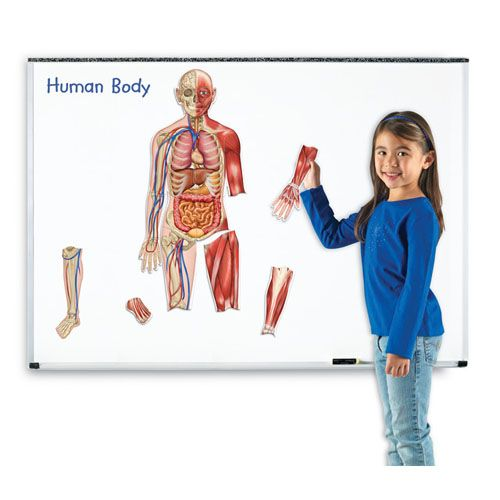 Corpul Uman Magnetic