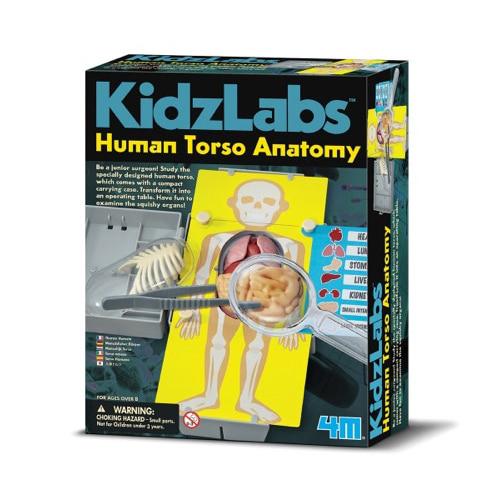 Joc Educativ Anatomia Bustului Uman