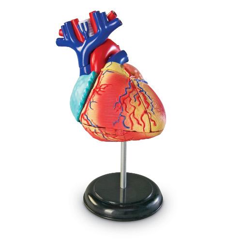 Learning Resources Joc Educativ Sablon Corp Uman – Inima